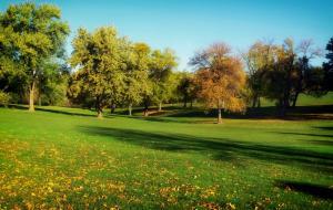 trees-grass-lawn-park
